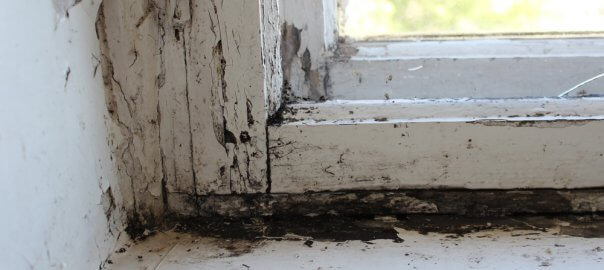 A close up of a white, rotting window frame. You can see trees out the corner of the window. Black mold is present underneath the window frame.
